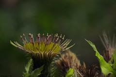 Fleur automnale