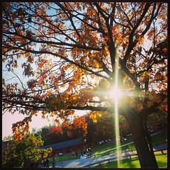 Sun Through the Leaves 1