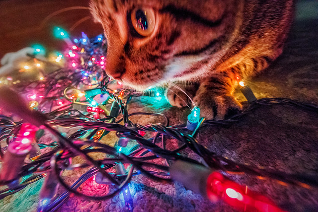 Casey and the Lights #Flickr12Days