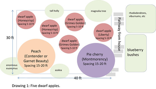 fruit tree planning 1