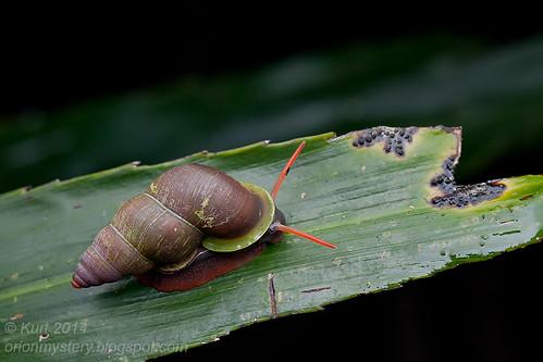 Snail IMG_4821 copy