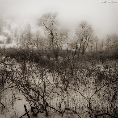 blackandwhite bw snow fog nikon colorado wildlife fortcollins toned ftcollins lorystatepark nikon2870mmf28 tonyhochstetler d800e