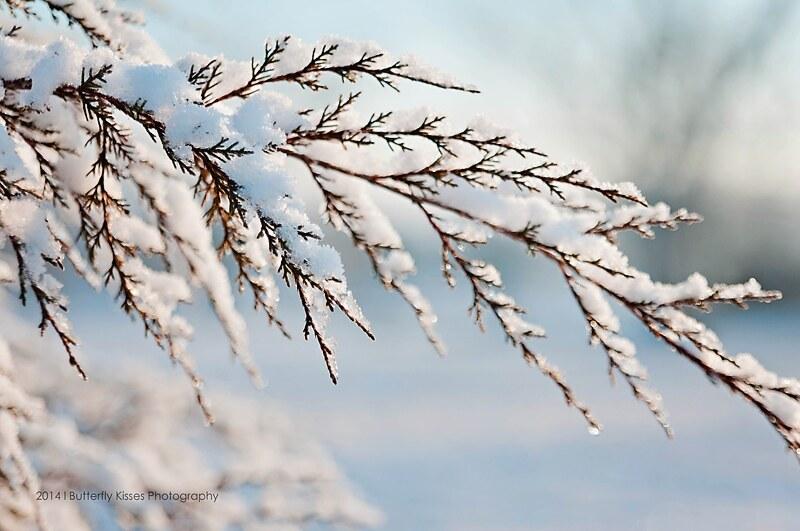 winter-0032 web