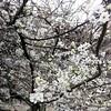 Ya se huele la #primavera en #Pamplona ... #igerspamplona #igersnavarra
