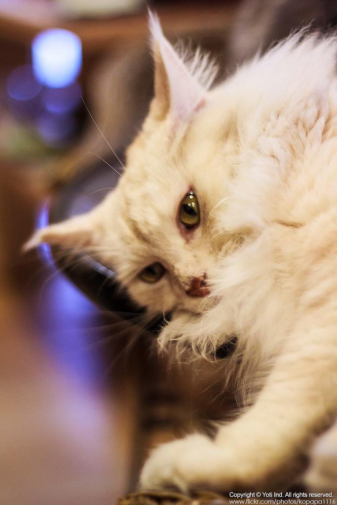 元氣貓主題餐廳 IMG_6035