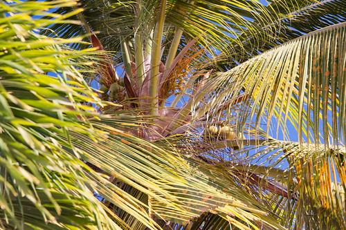 Antigua-2014-02-01-7520.jpg