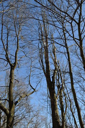 Volkspark Friedrichshain Berlin_creepy knarled tree