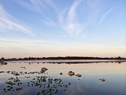 Harbour Lakes mitigation wetlands eagle flying over 20140406
