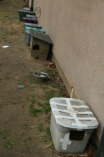 Food and water dishes dot feral cat colony, CoMo,   Matt Schacht