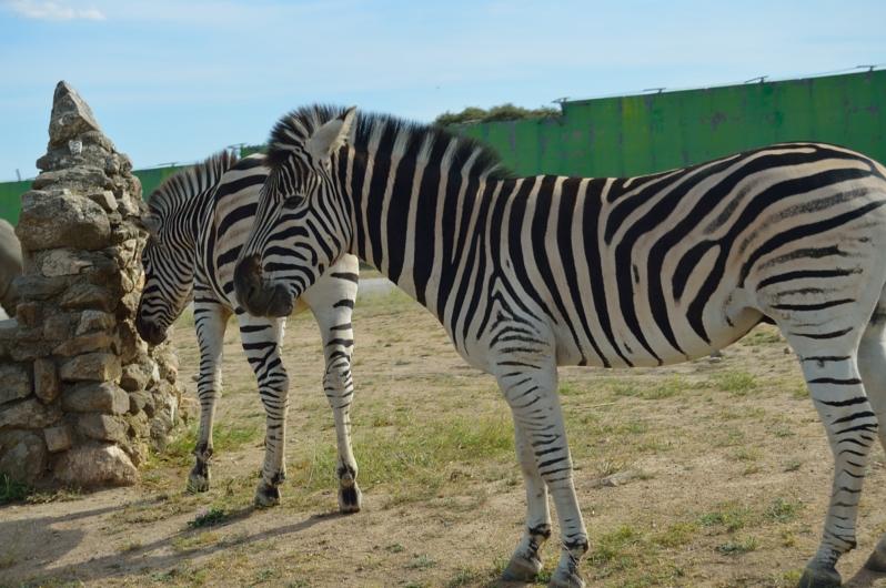 lara-vazquez-madlula-blog-cebras-safari