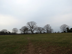 the trees of the field