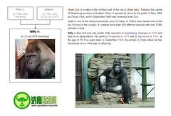 Gorilla: Willy