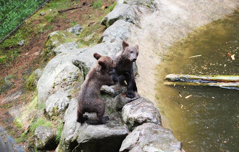 Järvzoo - Björnar