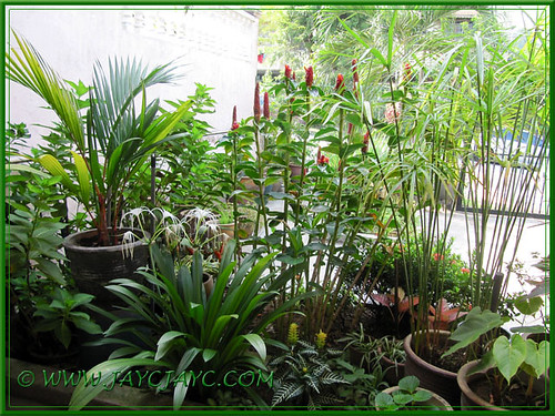 Viewing our garden from inside out