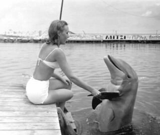 Unidentified woman shaking Flipper's ... flipper: Marathon, Florida
