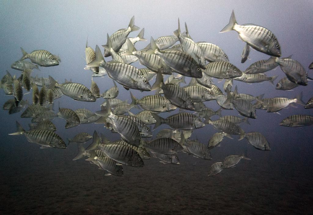 Diving Garajau Nature Reserve Madeira Funchal