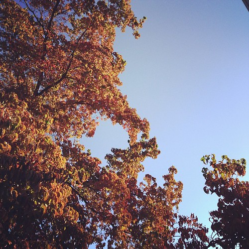 Morning light #fallfavorites