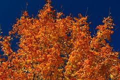 Misc. Autumn Photos