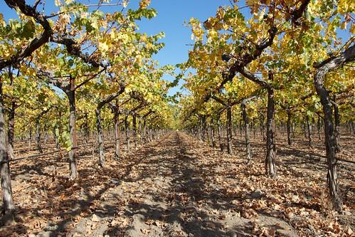 Sonoma Segway Wine Tour