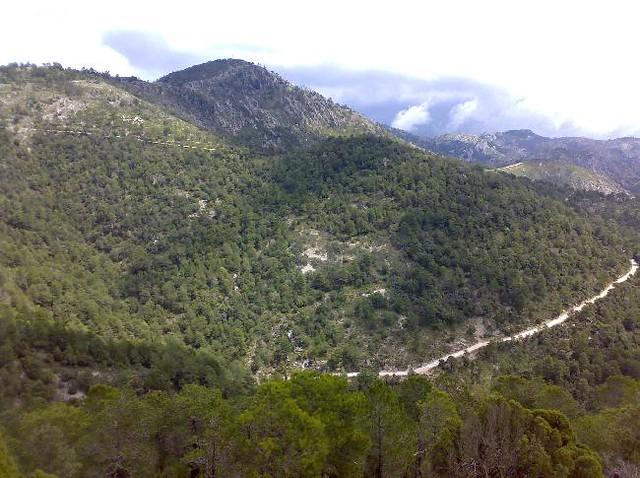 Pista forestal del Monte Tuemell
