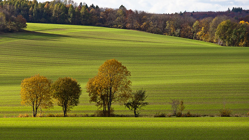autumn light shadow color green leave field leaves canon germany deutschland thüringen herbst thuringia blätter bunt ef70200mmf4lisusm canoneos5dmarkii