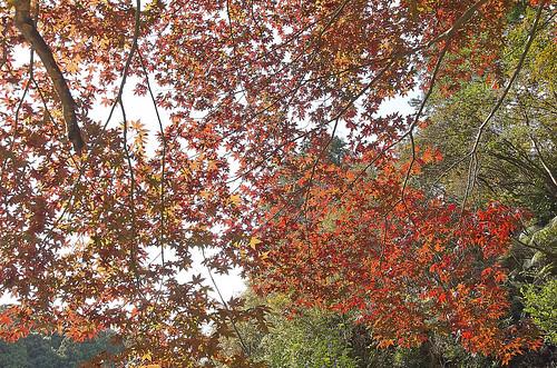 【写真】2013 紅葉 : 日向大神宮/2020-10-05/IMGP3377