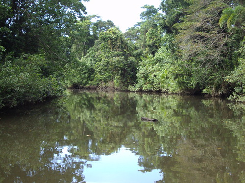 Daintree River. Reflections and a log not a crocodile.