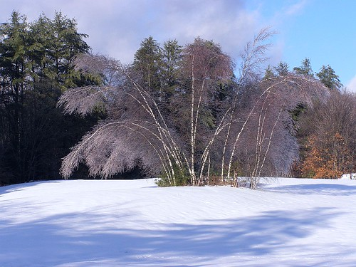 2013_1224Ice-Covered0018 by maineman152 (Lou)