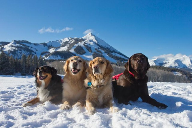 Avi dogs at Crested Butte