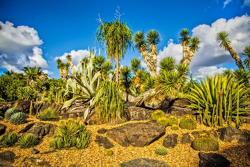 plants clouds landscape parks
