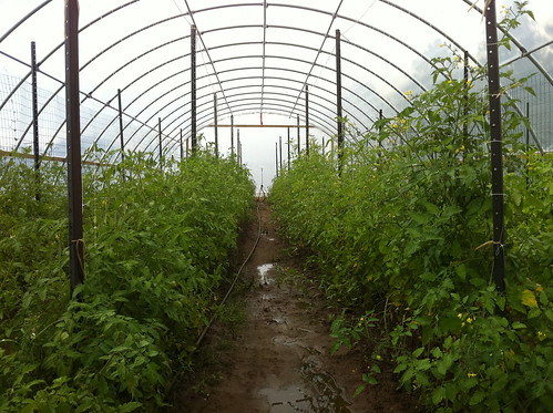 Tomatoes are some of the many vegetables on Owl Forest Farms. NRCS photo.