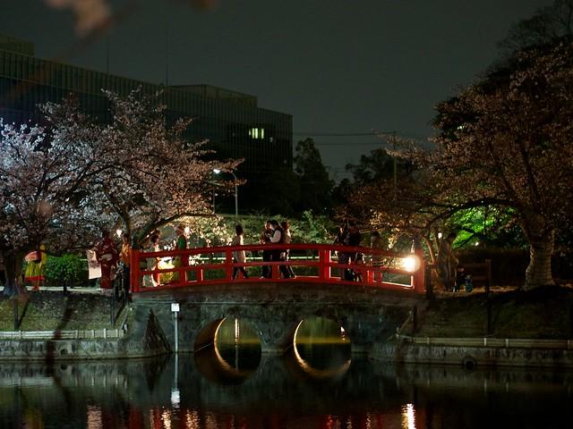 140329_NightSakura 5