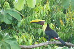 animal(1.0), hornbill(1.0), rainforest(1.0), branch(1.0), toucan(1.0), fauna(1.0), jungle(1.0), beak(1.0), bird(1.0), wildlife(1.0),
