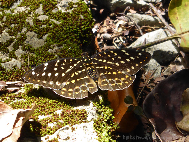 Mount Serapi Butterfly 3