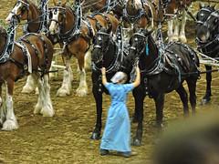 Eight Horse Hich