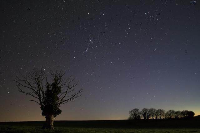 Orion et son arbre-20170326