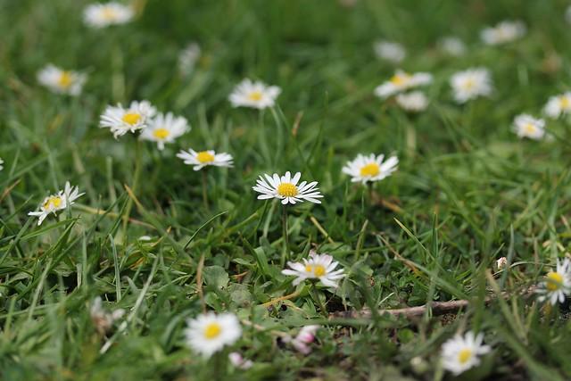 kukkia2