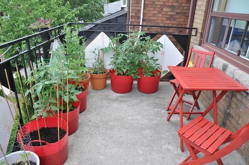 garden, June 27