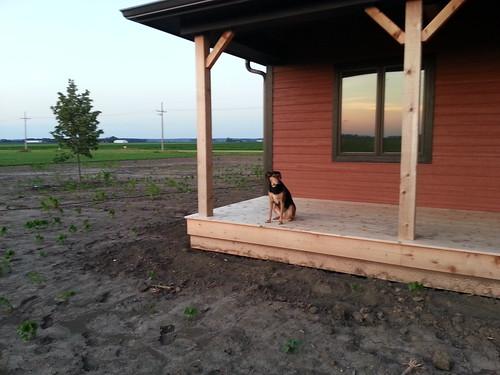 Bella on the Back Porch