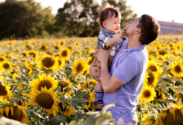 dallas sunflower fields