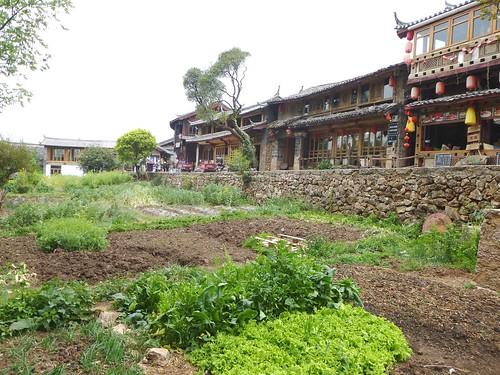 Yunnan13-Shuhe-Nature (5)