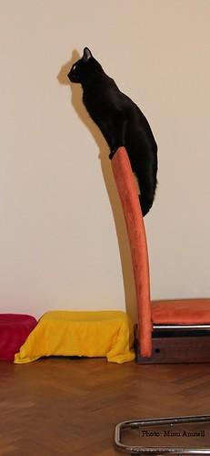 Kenzon kynsienteroittamistuoli by Anna Amnell