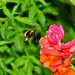 The Pollen Heist... by HiJinKs Media...
