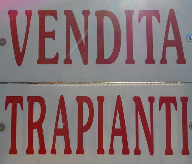 Vendita Trapianti, Sarzano, Rovigo