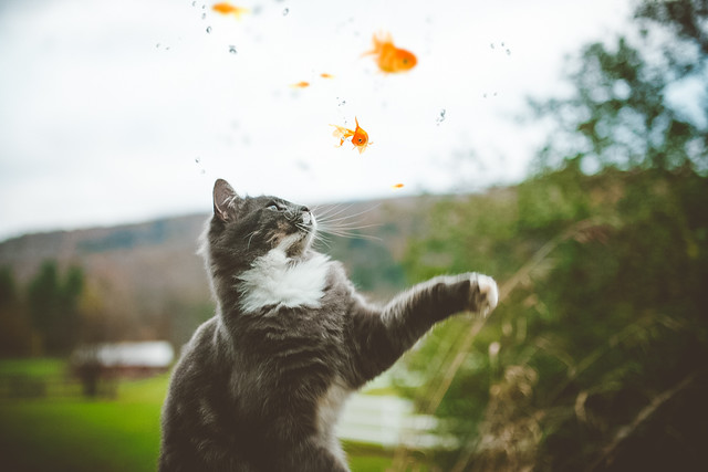 Cats Photography Gallery