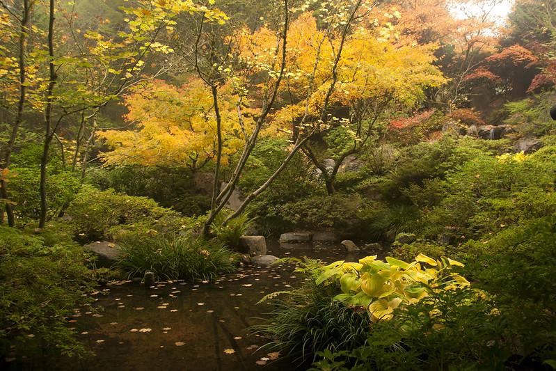 hosta pond