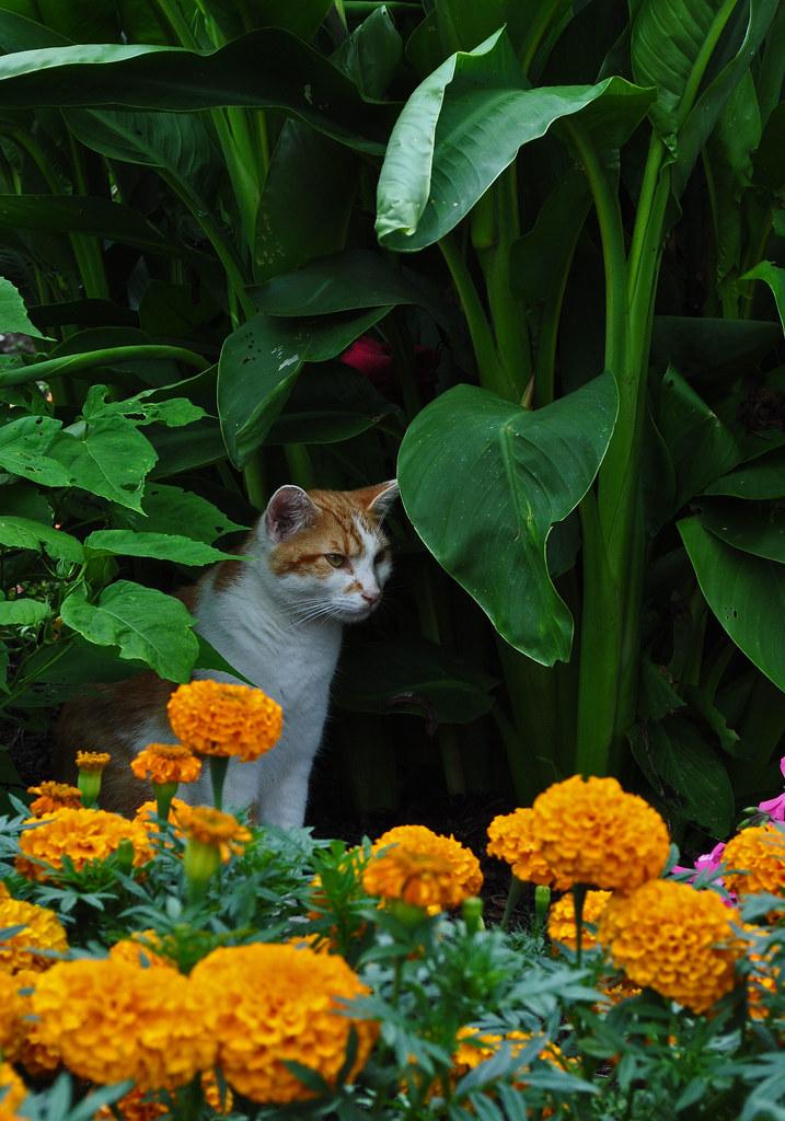 Idea Garden (7)