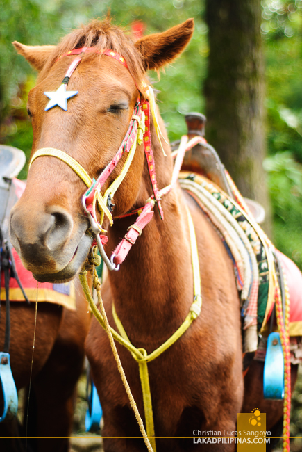 Horses for Rent at Baguio's Wright Park