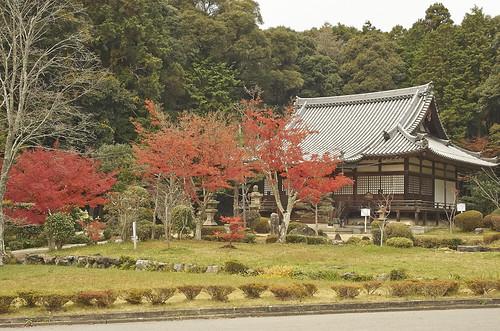 【写真】紅葉 : 観音寺