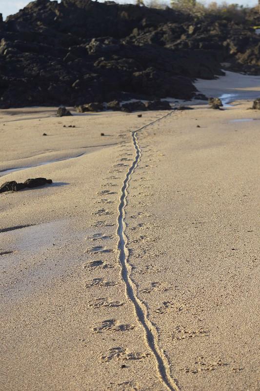 galapagos rabida cerro dragon 166